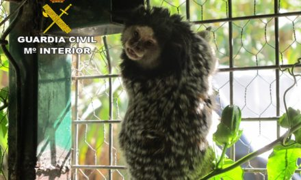 Monkey seized with guns and drugs on Gran Canaria