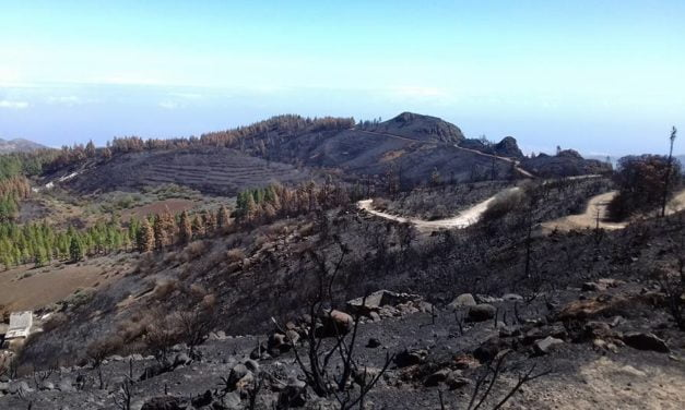 Seeking volunteers to help replant trees after the Gran Canaria fire…