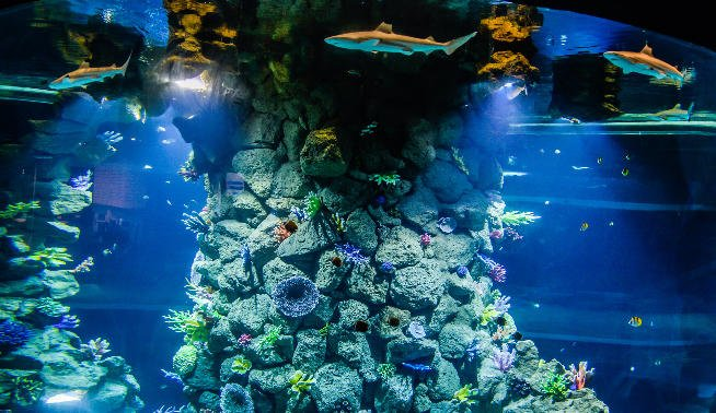 The Poema del Mar aquarium attraction opens with eight captive sharks and 350 marine species in tanks